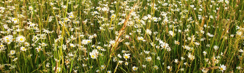GD 2014 Flower meadows