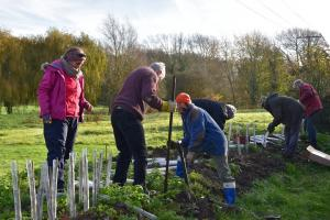 Planting hedge at Nontron Meadows