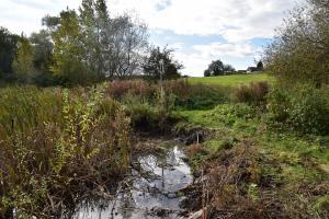 The pond after vegetation removed