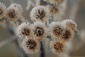 Frosted burrs