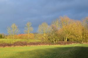 Winter sunlight on the hedgerow trees