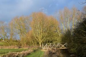 Winter willows and Watkins bridge