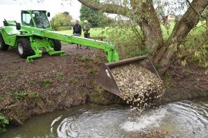 Dumping gravel in brook to improve habitat for fish