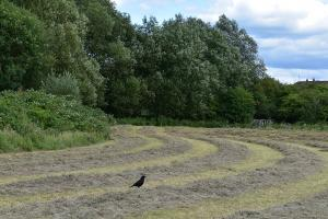 cuttlebrook meadows annual cut in late summer